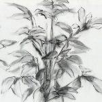 Dibujo de paisaje a carboncillo de Julia r. Ortega Arte contemporáneo